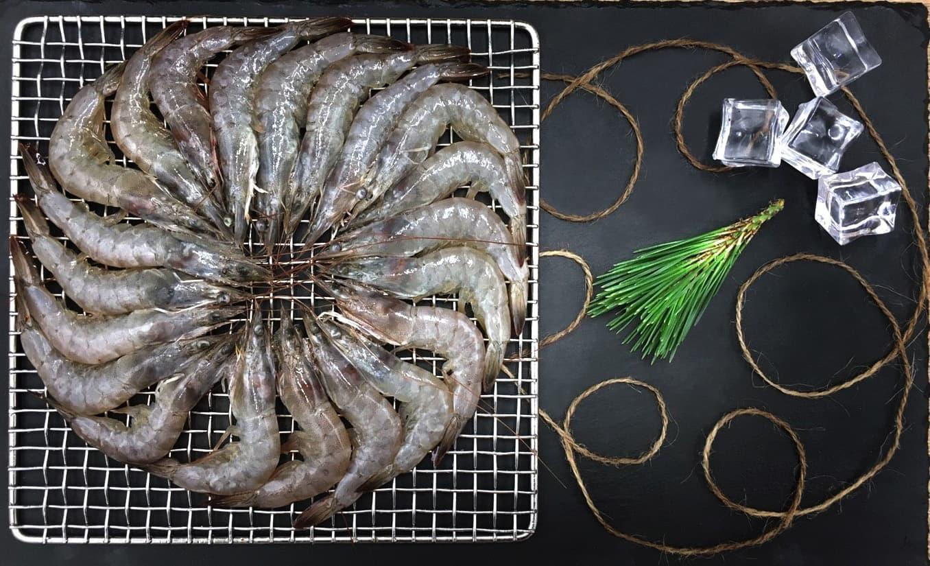 鮮白蝦11